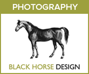Black Horse Design Photography (West Wales Horse)