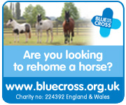 Blue Cross Burford (West Wales Horse)
