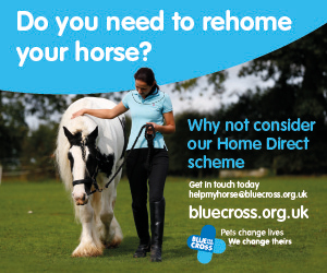 Blue Cross 2020 A (West Wales Horse)