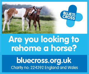 Blue Cross 2020 B (West Wales Horse)
