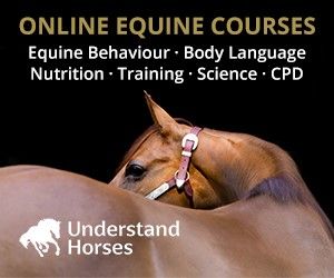 Understand Horses (West Wales Horse)
